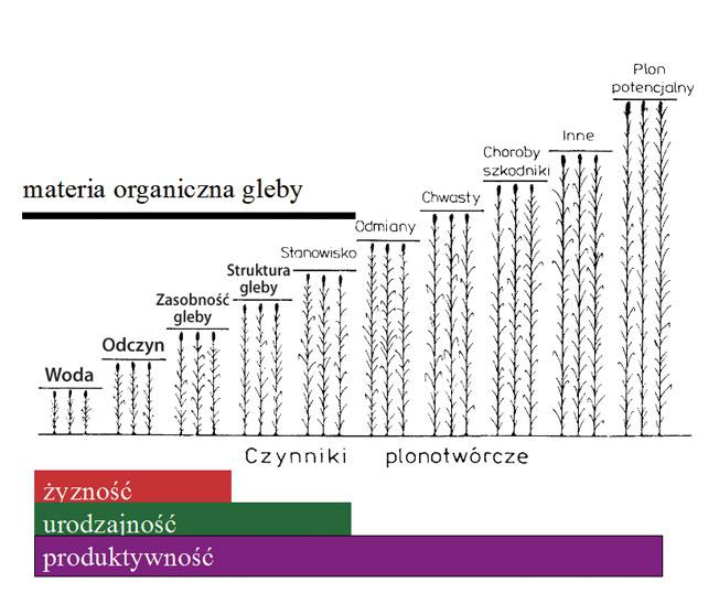 schody_grzebisza