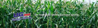 Kukurydza z UGmax