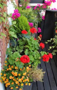 UGmax kwiaty